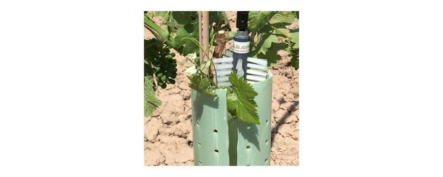Elimina los brotes y chupones de olivas y viñas con y sin protecciones